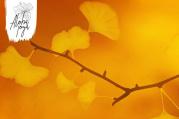 Podzimní detox: imunita a slezina