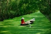 Vietnam In-life