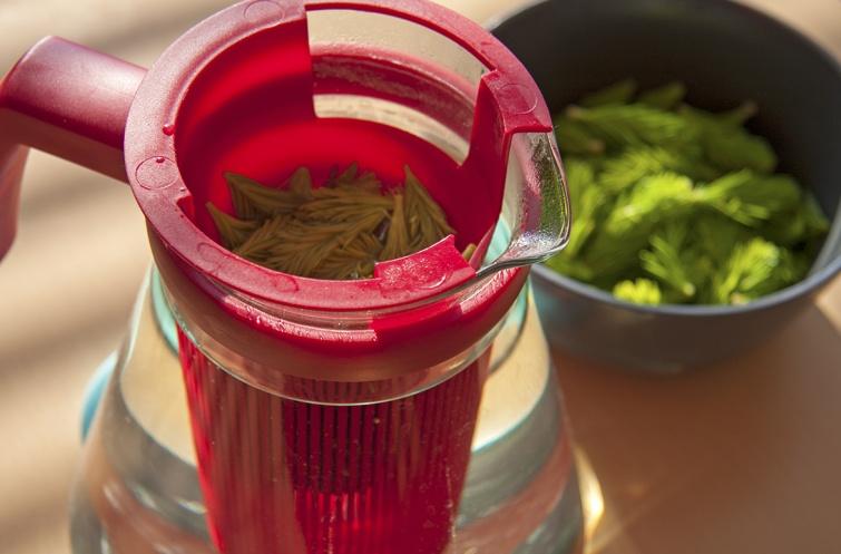 Lesní čaj i sirup plný vitamínů z mladých smrkových výhonků